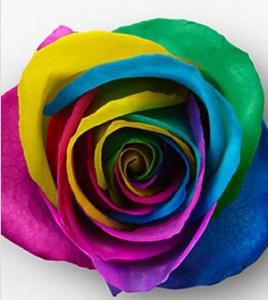 FTD rose